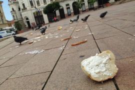 Túletetéssel mérgezik a pécsi galambokat