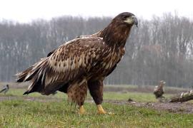 Sérült madarat gyógyítottak Dráva-szentesen